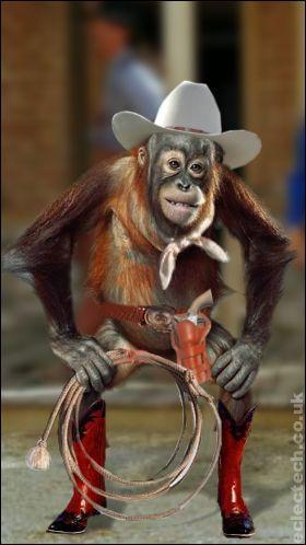orangacowboy.jpg