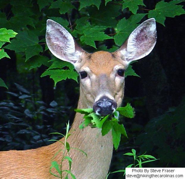 deer_munch.jpg