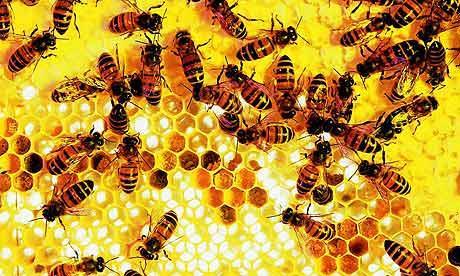 honeycomb-reso-rex460.jpg