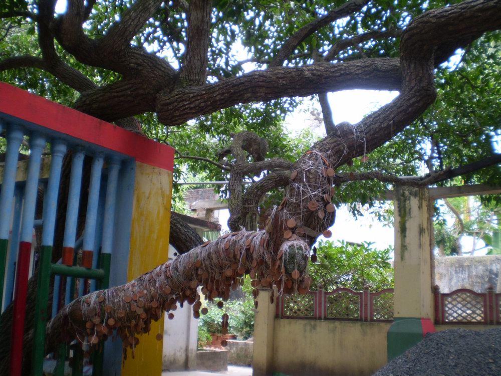 Desire Tree