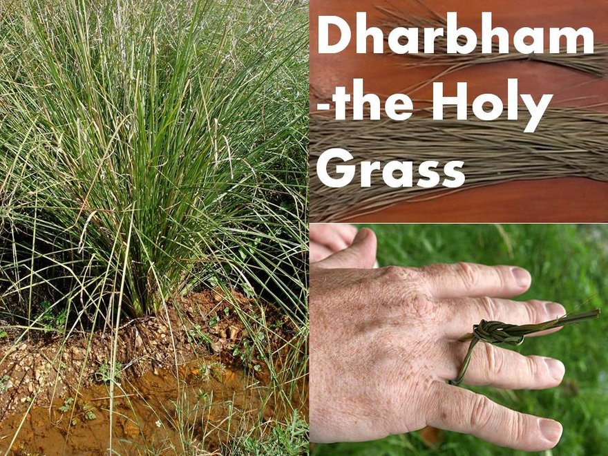 Importancia de dharba Hierba en Puja