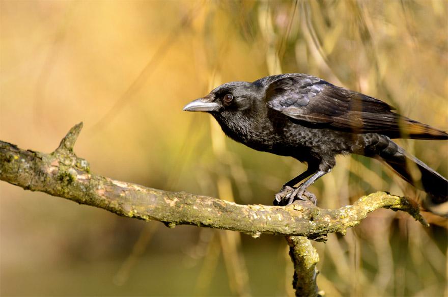 The Life of Kaka Bhusundi the Crow Sage