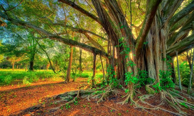 Trees – A Beautiful Gift of Nature