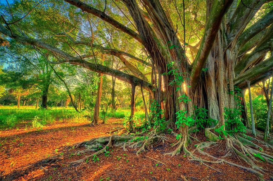 Árboles - Un hermoso regalo de la naturaleza
